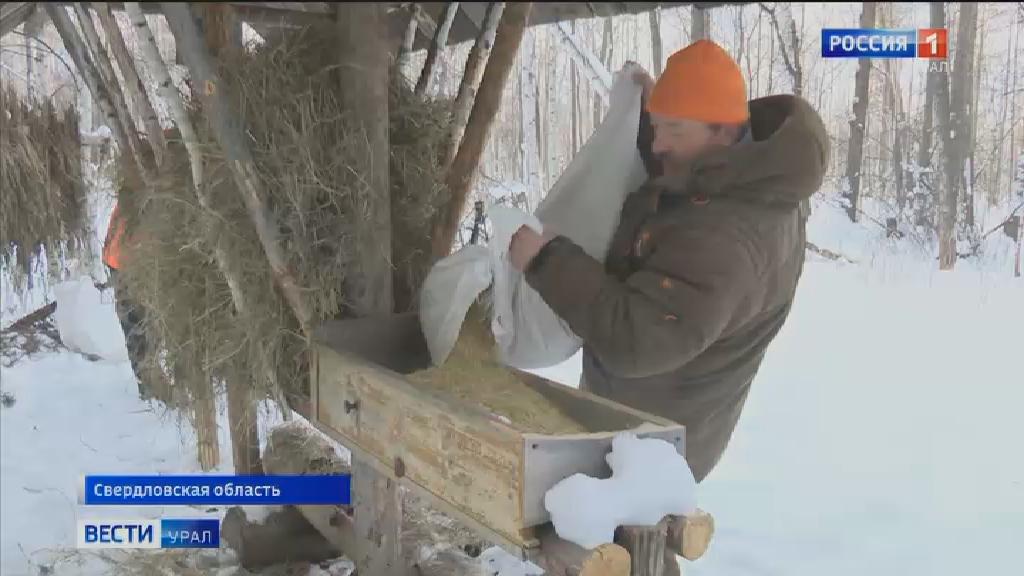 Уральские егеря начали подсчёт животных в лесах