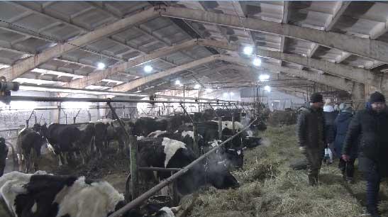 В Лесном на ферме крупного рогатого скота прокуратура провела проверку