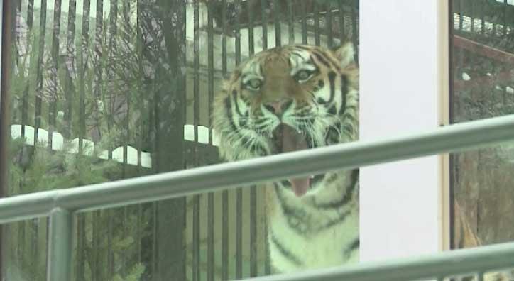 Новые животные появятся в Екатеринбургском зоопарке