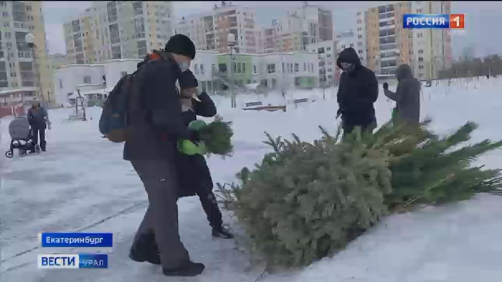 Более двух сотен деревьев переработали в рамках акции «Утилизируй ёлку»