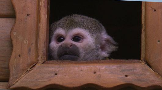 Барсук по имени Мэри стала зоомисс Екатеринбургского зоопарка