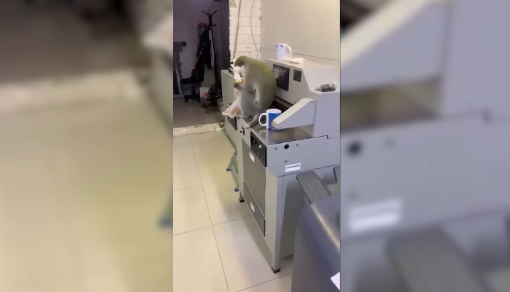 В Асбесте два дня ловили сбежавшую обезьяну