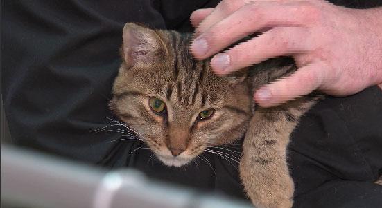 Прививочные сертификаты получили кошки, живущие в ИК №10