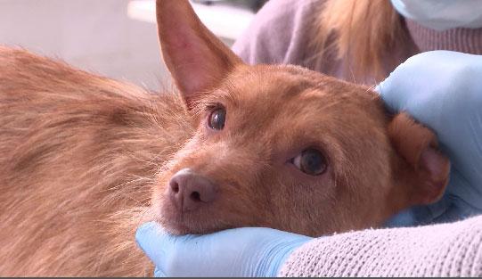 В Центре реабилитации животных выхаживают собаку по кличке Зина