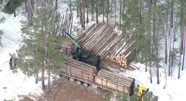 Вырубкой леса обеспокоены жители посёлка Кедровое