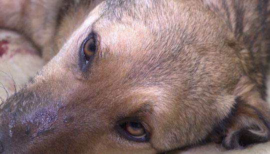 В Алапаевске задержан мужчина, расстрелявший собаку