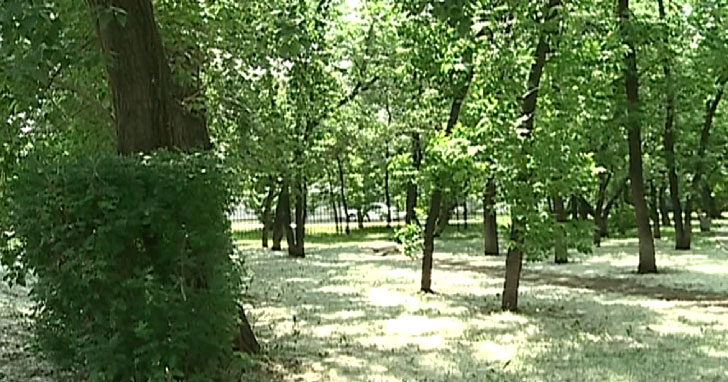 Сезон аллергий начался на Урале