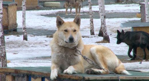 В Первоуральске живодёр жестоко расправился с собаками