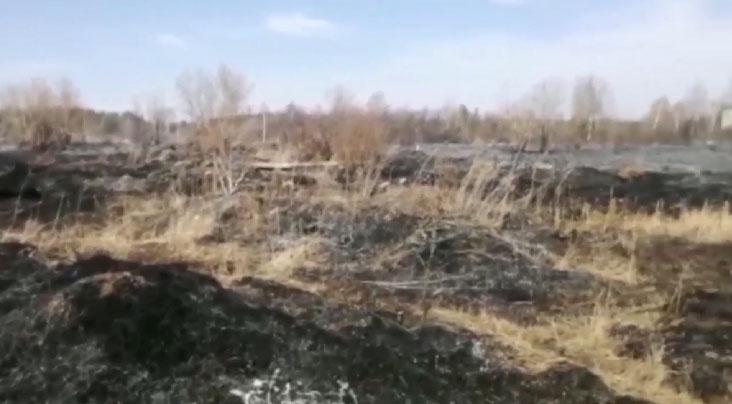 В Талице пожарные ликвидировали возгорание сухой травы