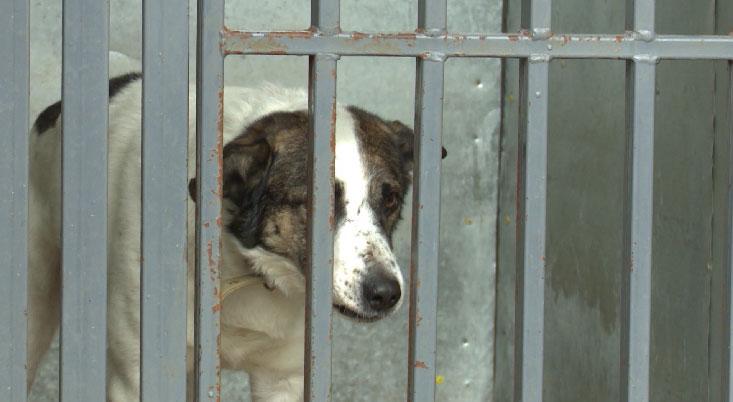 Создание дополнительных приютов поможет решить проблему бездомных животных