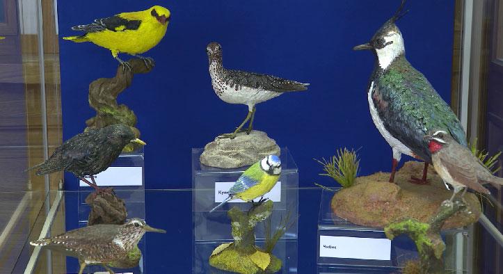 Уральский художник-реставратор создаёт 3D-модели птиц