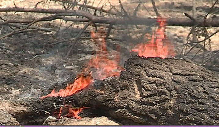 В Свердловской области введён противопожарный режим