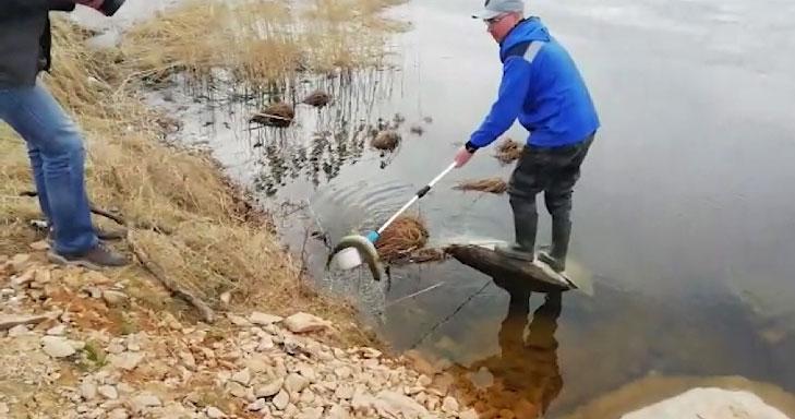 На Нейво-Рудянском водохранилище массовый мор рыбы
