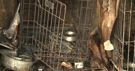 В Билимбае сгорел приют для бездомных собак и кошек