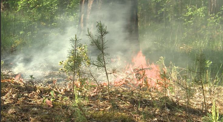 В Свердловской области введут запрет на посещение леса