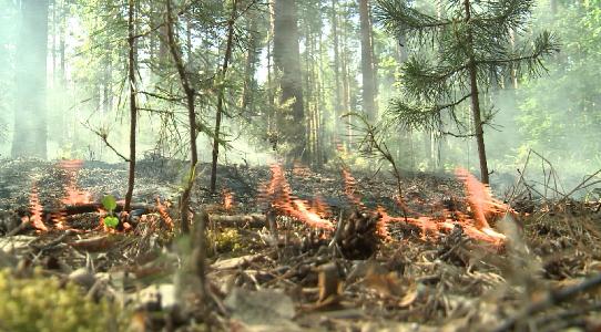 Природный пожар приблизился к Челябинскому тракту