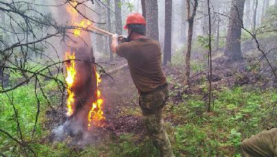 Огонь захватил уже 63 гектара леса
