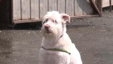 День открытых дверей состоялся в городском приюте для собак