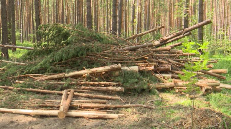 На вырубку деревьев пожаловались жители Сысертского района