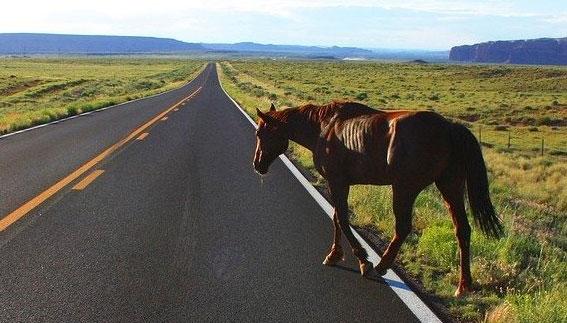 Конь стал причиной ДТП на трассе между Екатеринбургом и Серовым