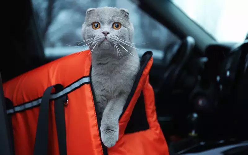 Горожане вызвали полицию, обнаружив животных в запертой машине