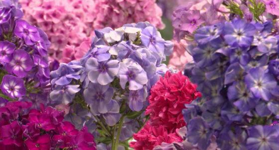 Выставка цветов открылась в Ботаническом саду