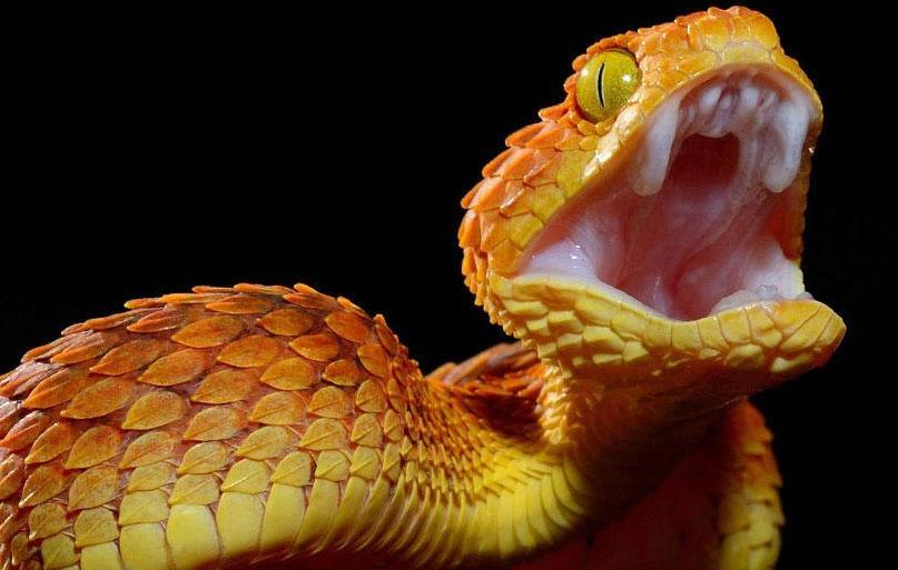 Змея напала на ребёнка в Екатеринбурге