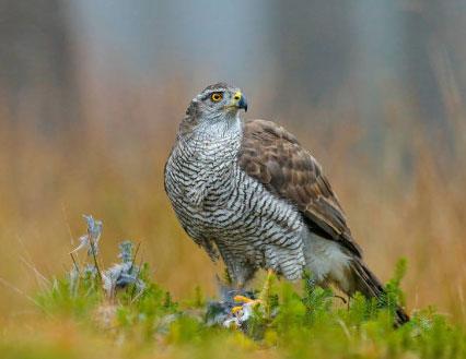 На Уралмаше нашли птицу из Красной книги с раненым крылом