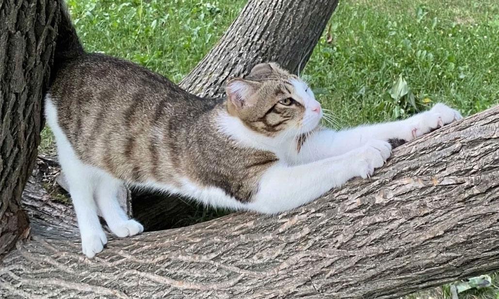 В дендропарке пропал местный кот-инспектор