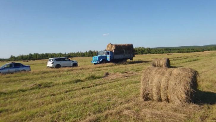 В Нижнем Тагиле фермеры поймали злоумышленников, воровавших сено