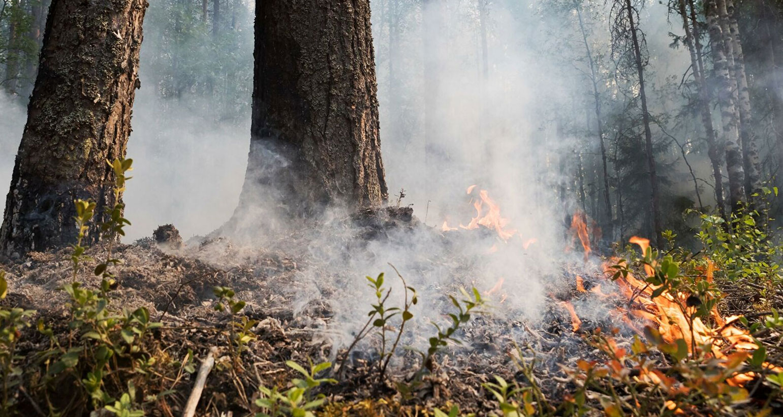 Подозреваемых в поджоге леса под Первоуральском доставили в полицию