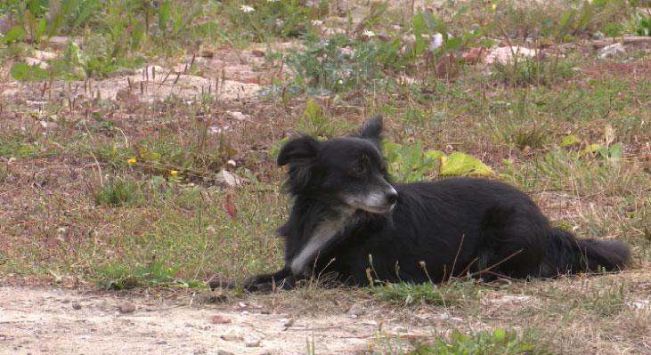 В деревне Шилова пёс искусал восьмилетнего ребёнка