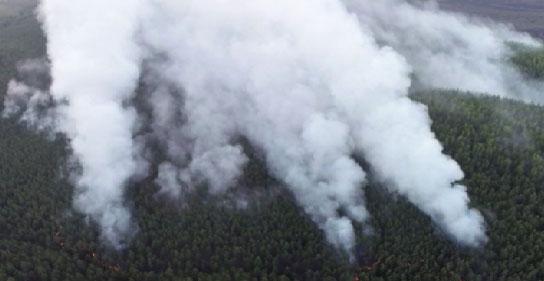 В регионе увеличивается площадь лесных возгораний
