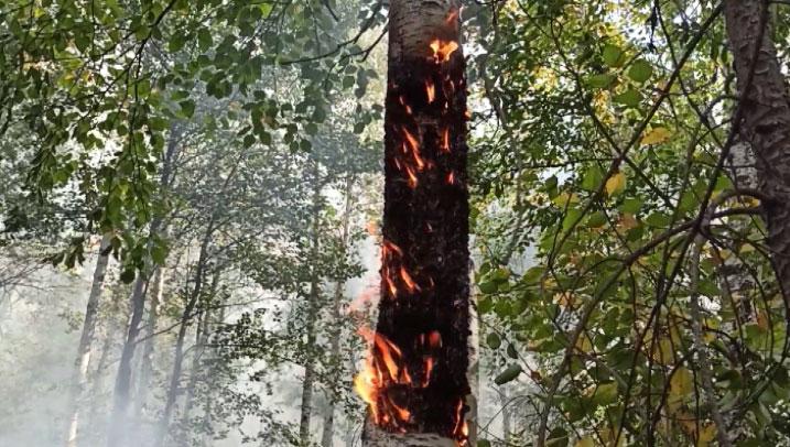 Из-за сухой погоды в регионе продолжают гореть леса