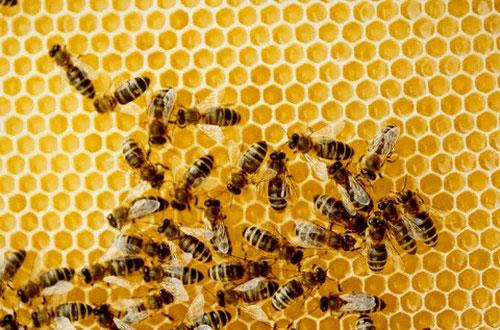 Пчеловоды готовят судебный иск к местному сельхозпредприятию