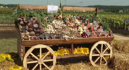 Главная сельхозвыставка страны продолжается в Свердловской области