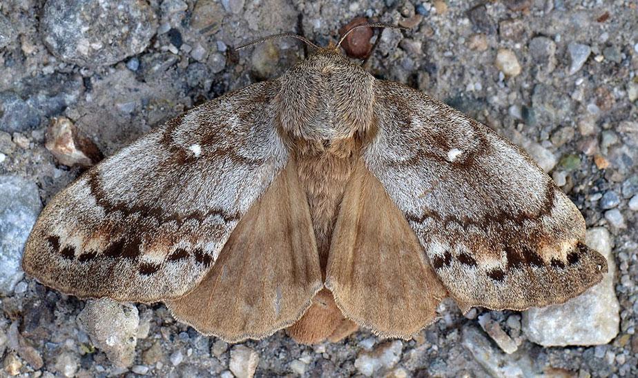 Свердловским лесам угрожают не только пожары, но и бабочки-паразиты