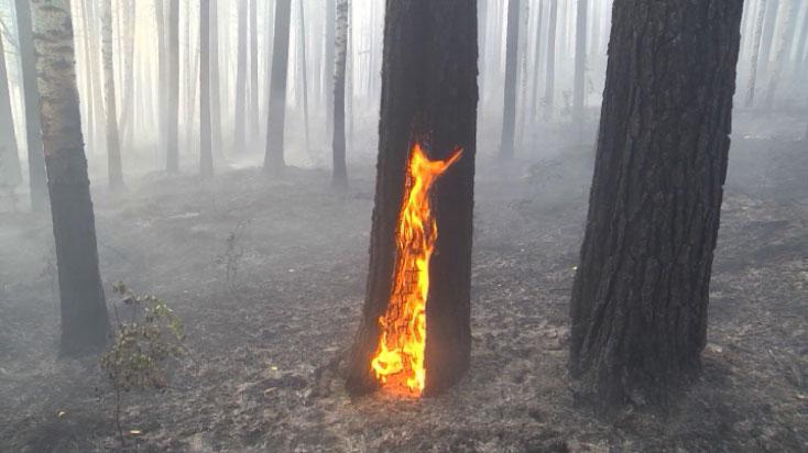 На лесных поджигателей заведено три уголовных дела