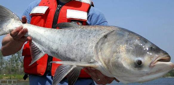 Ловись рыбка большая