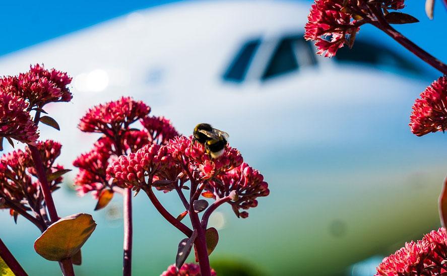 Самолет из Амстердама с 80 тоннами цветов приземлился в Кольцово