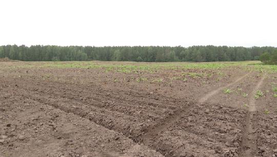 Количество пестицидов, распыляемых на свердловских полях, выросло в два раза