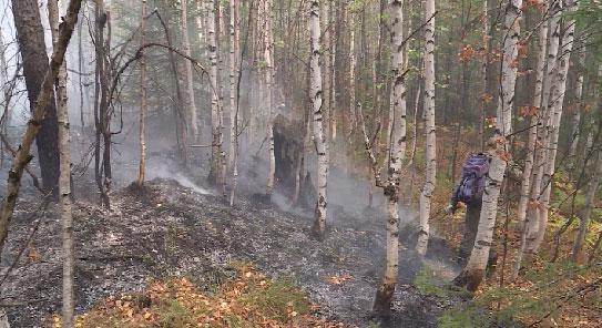 Ущерб от лесных пожаров в области превысил 50 млн рублей