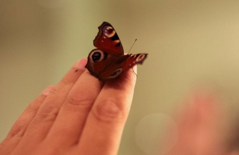 Продолжение истории с укушенной девочкой. «Парк бабочек» будут судить