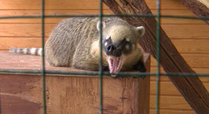 Перед судом предстанет владелец зоопарка, где змея укусила девочку