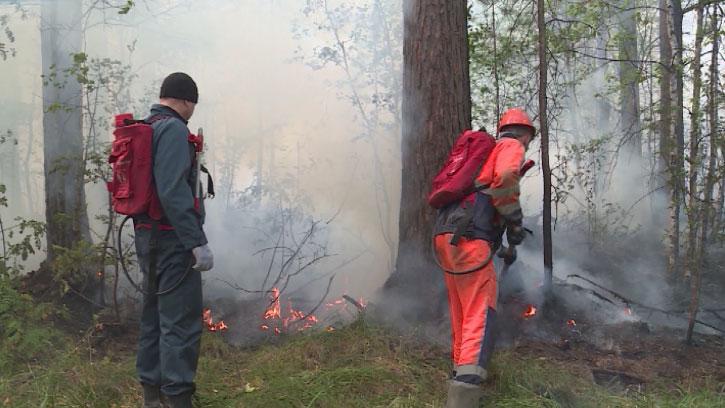 Мобильные патрули обследуют леса в поисках поджигателей