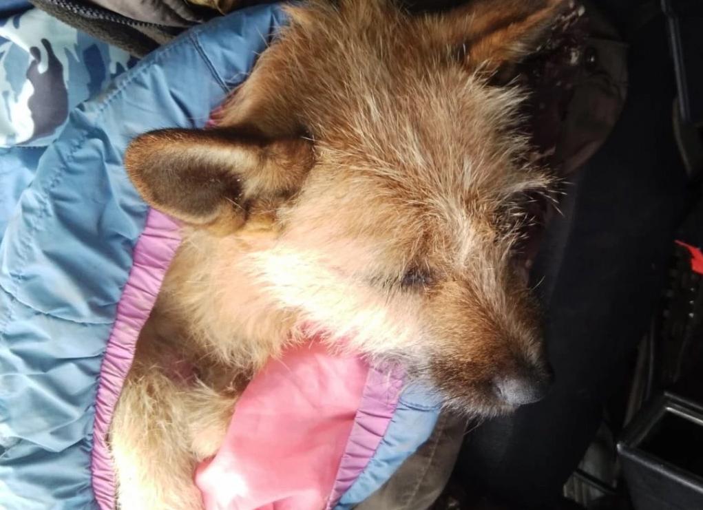 В Асбесте из окна многоквартирного дома выкинули собаку