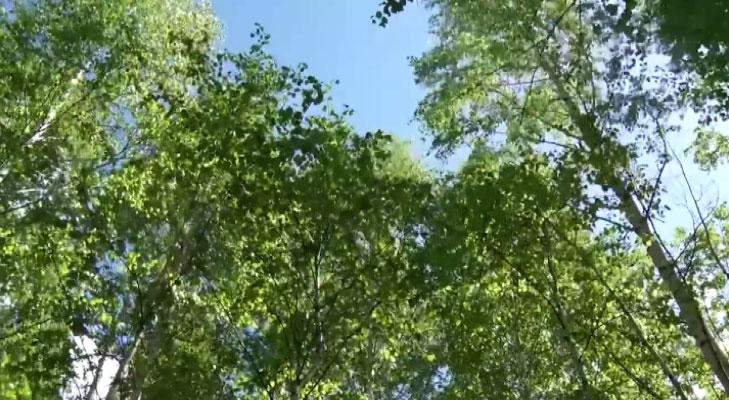 Участок в лесной глуши получила многодетная семья из Нижнего Тагила