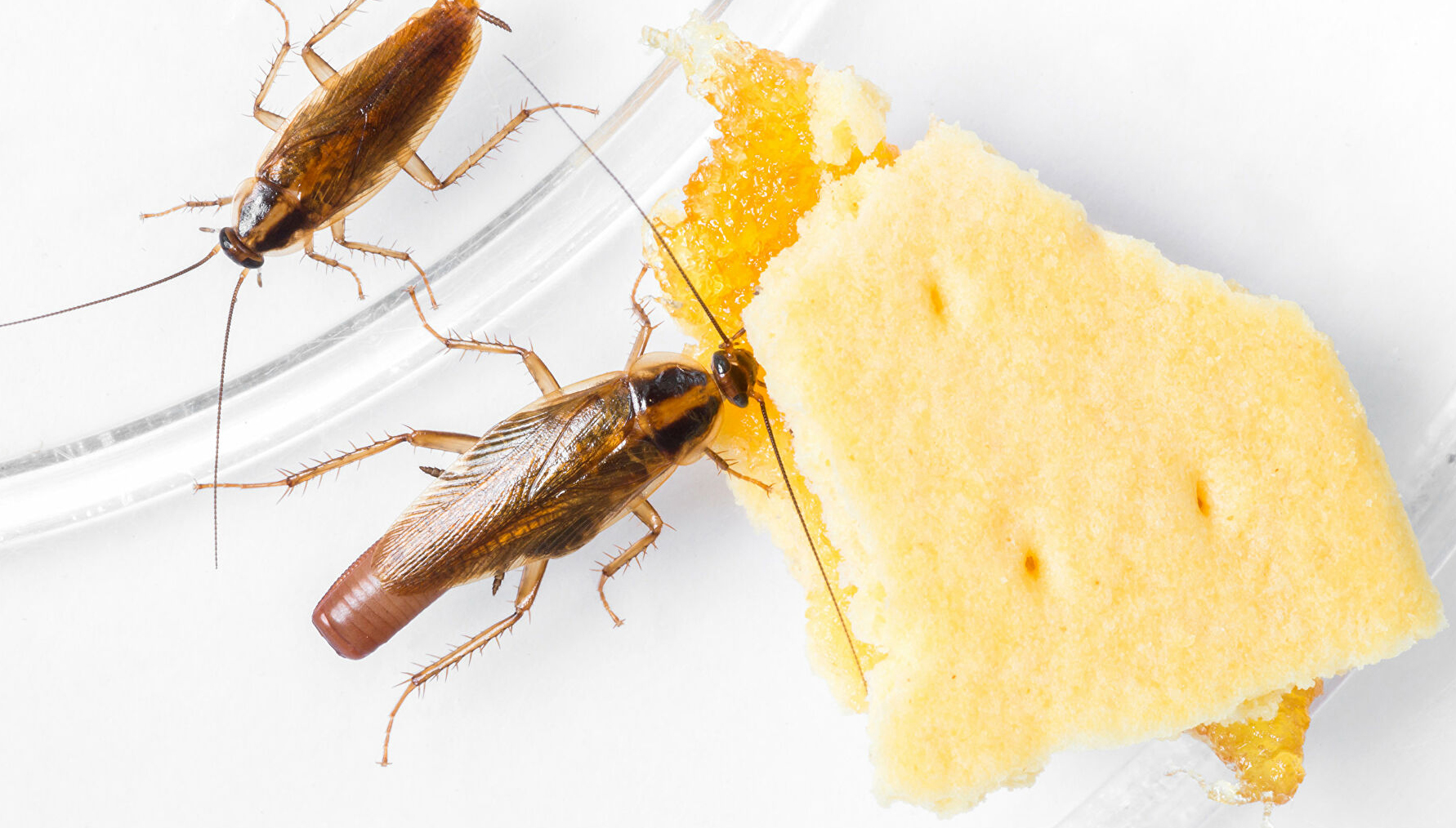 Нашествие тараканов в детском саду Берёзовского