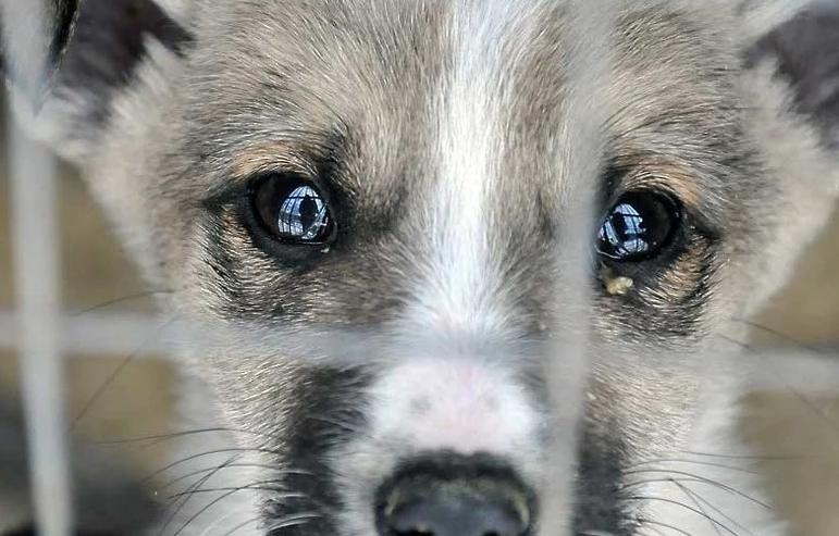 В Березовском ищут убийцу собаки