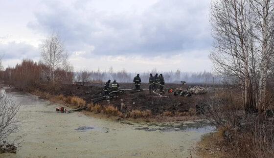 Тушение торфяников под Екатеринбургом продолжается
